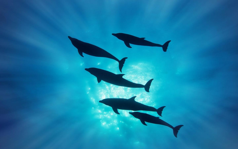 Delfines en el mar - 1440x900