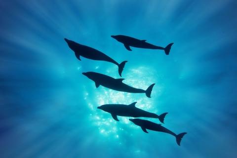 Delfines en el mar - 480x320
