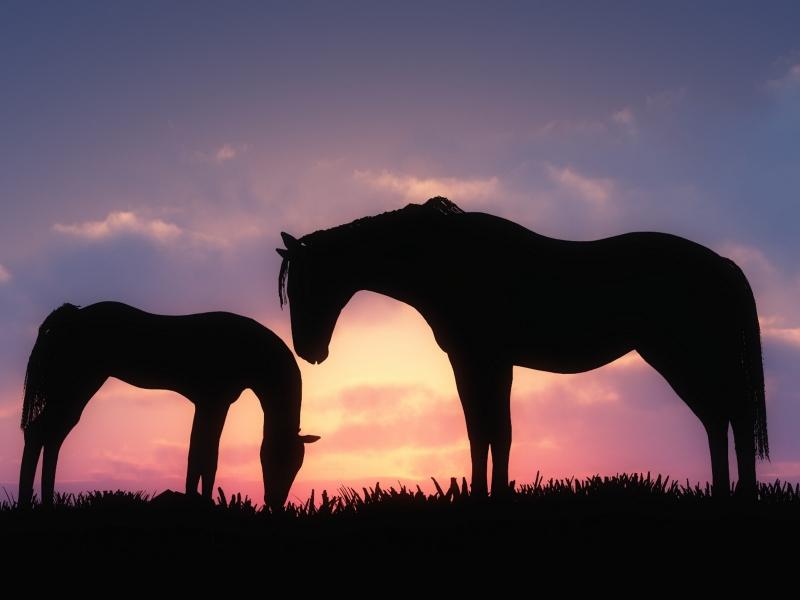 Dos caballos - 800x600