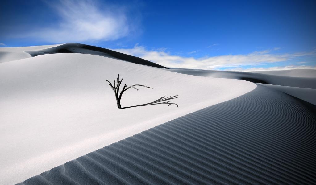 Dunas en el desierto - 1024x600