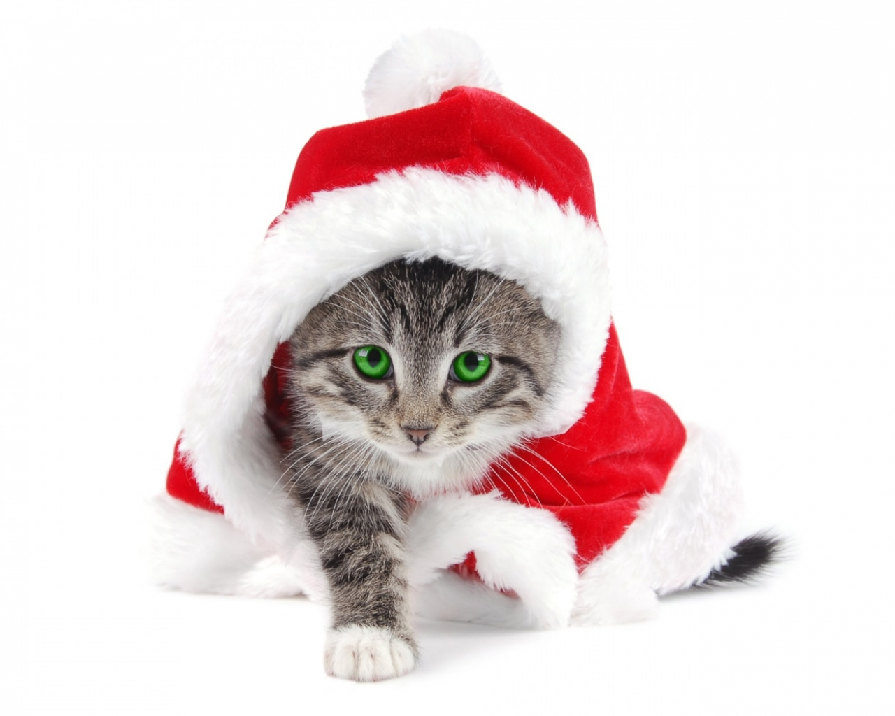 El gato Santa Claus - 1280x1024
