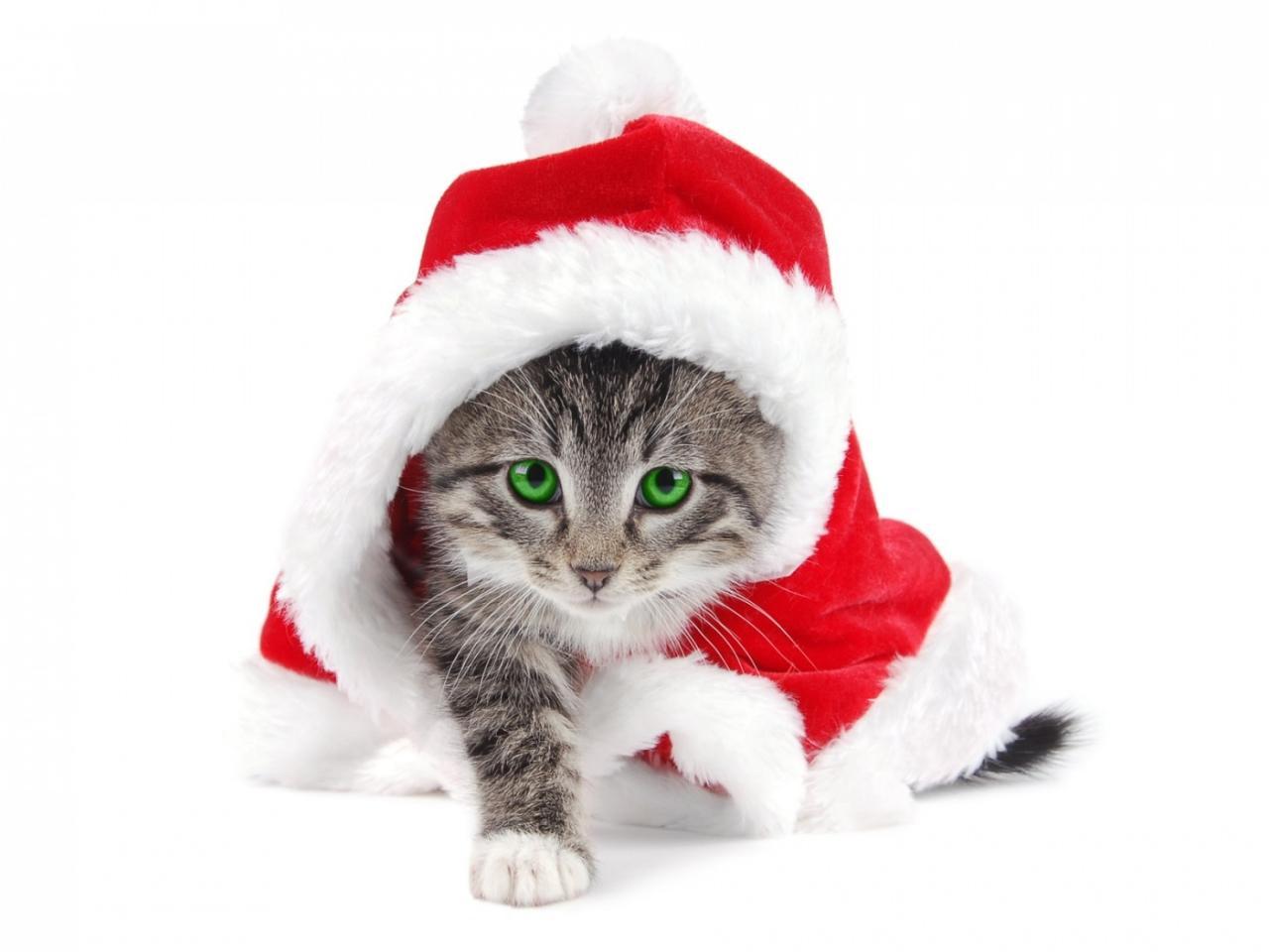 El gato Santa Claus - 1280x960