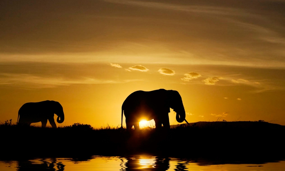 Elefantes en atardecer - 1000x600