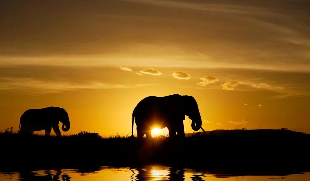 Elefantes en atardecer - 1024x600