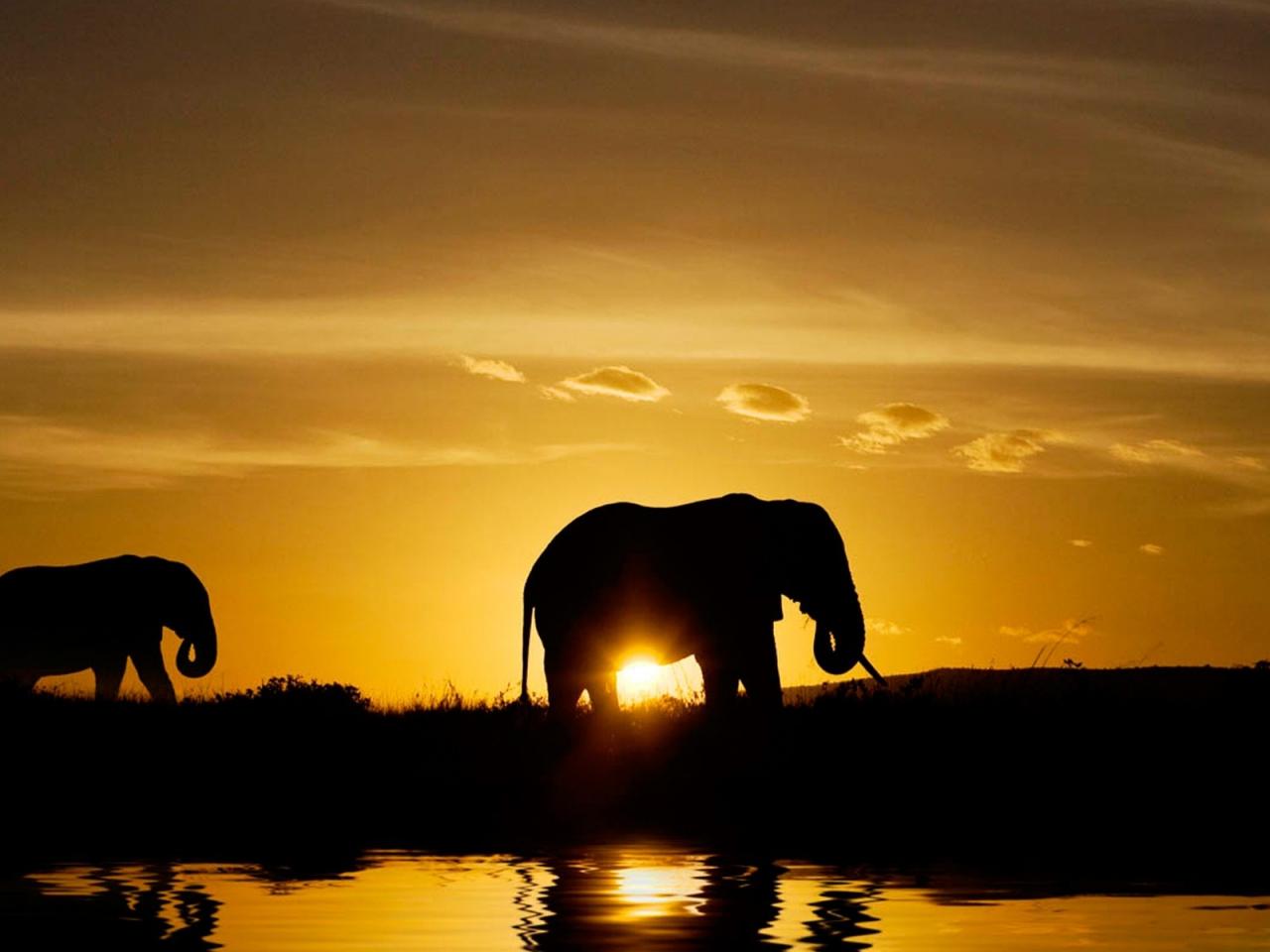 Elefantes en atardecer - 1280x960