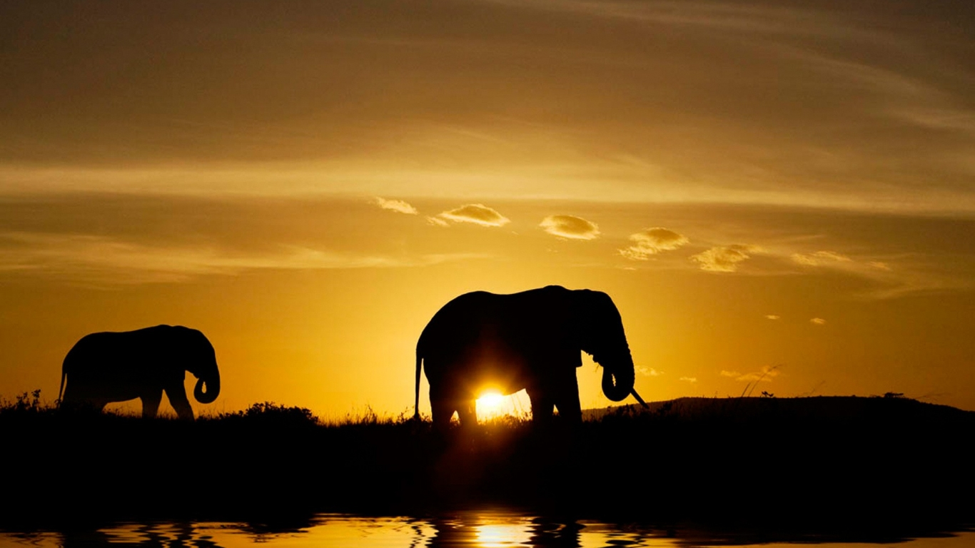 Elefantes en atardecer - 1366x768