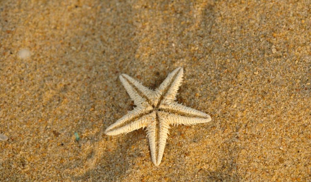 Estrella de mar en la arena - 1024x600