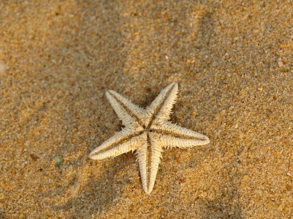 Estrella de mar en la arena - 1024x768