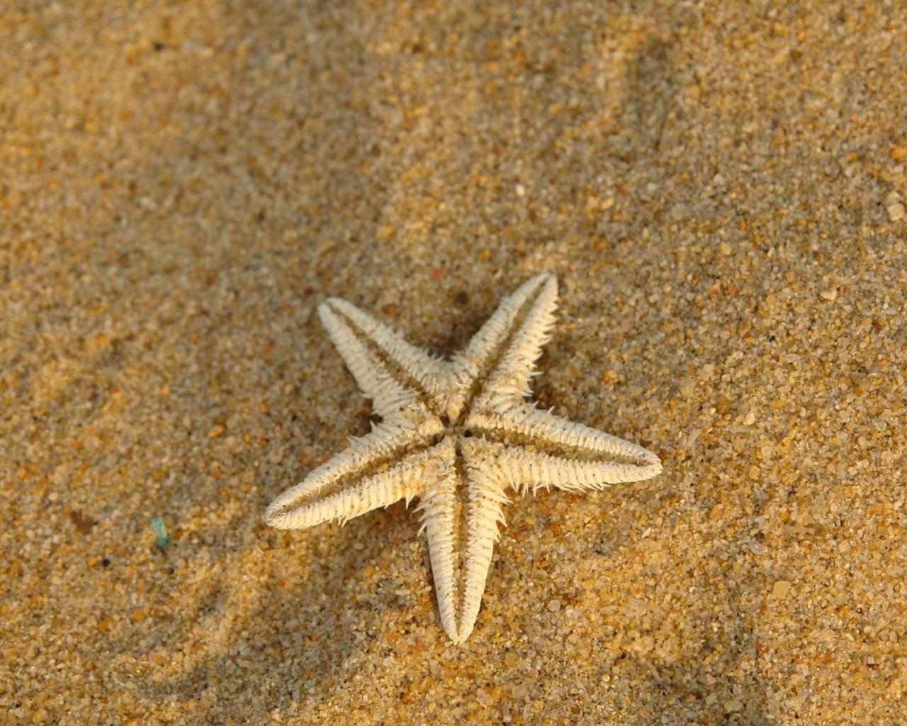Estrella de mar en la arena - 1280x1024