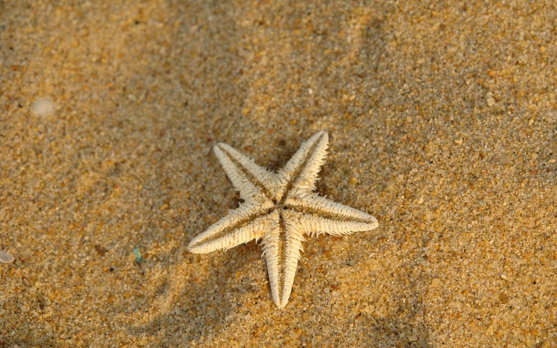 Estrella de mar en la arena - 1440x900