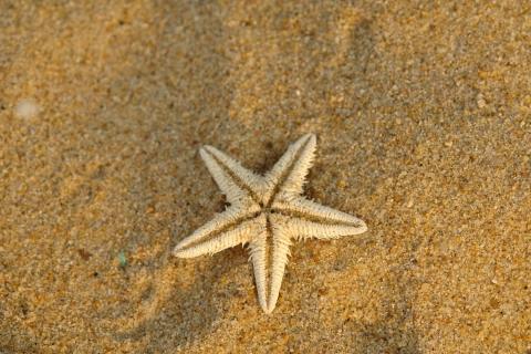Estrella de mar en la arena - 480x320