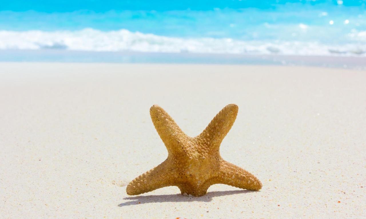 Estrella de mar en la playa - 1280x768
