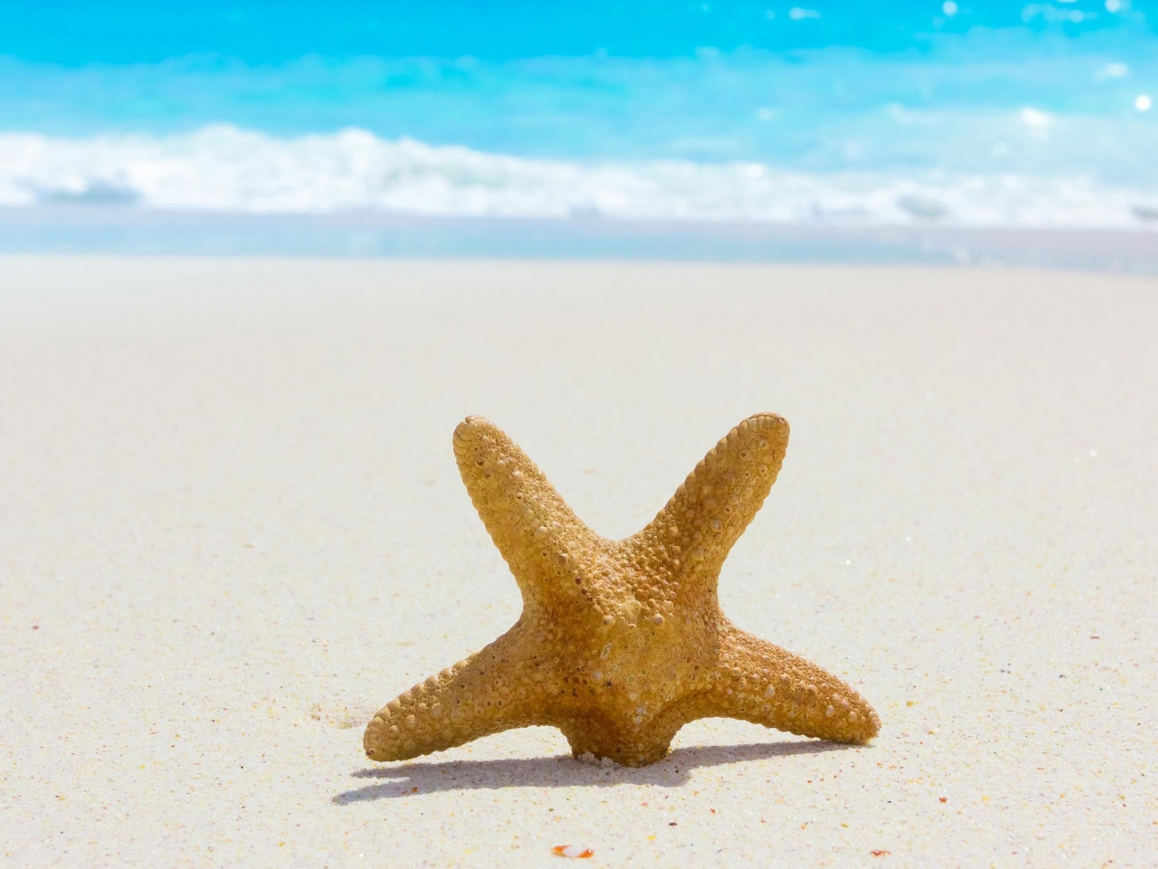 Estrella de mar en la playa - 1280x960