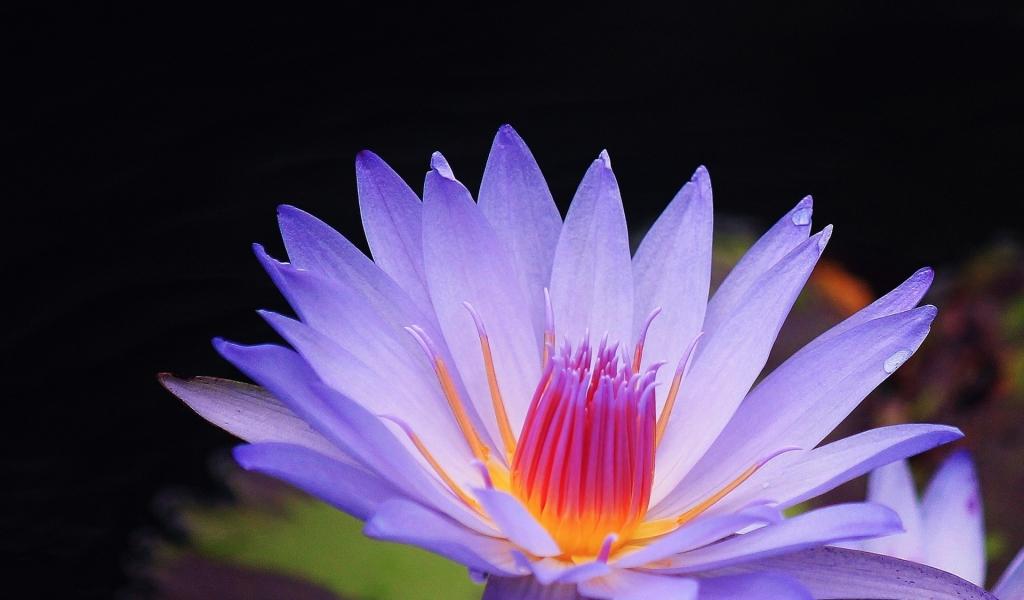 Flor purpura macro - 1024x600