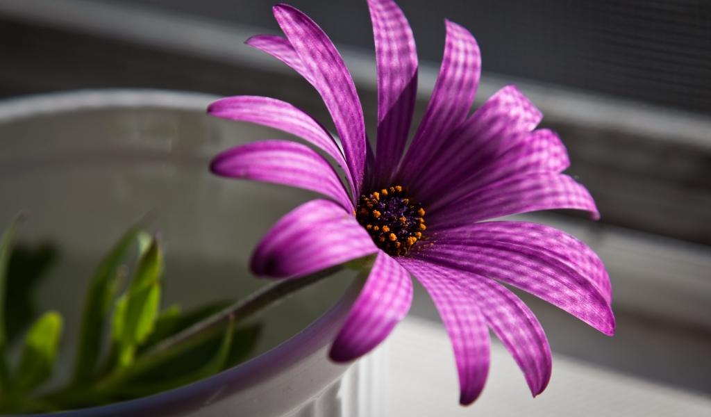 Flor purpura - 1024x600