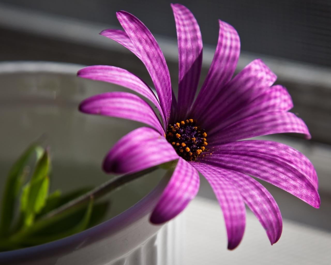 Flor purpura - 1280x1024