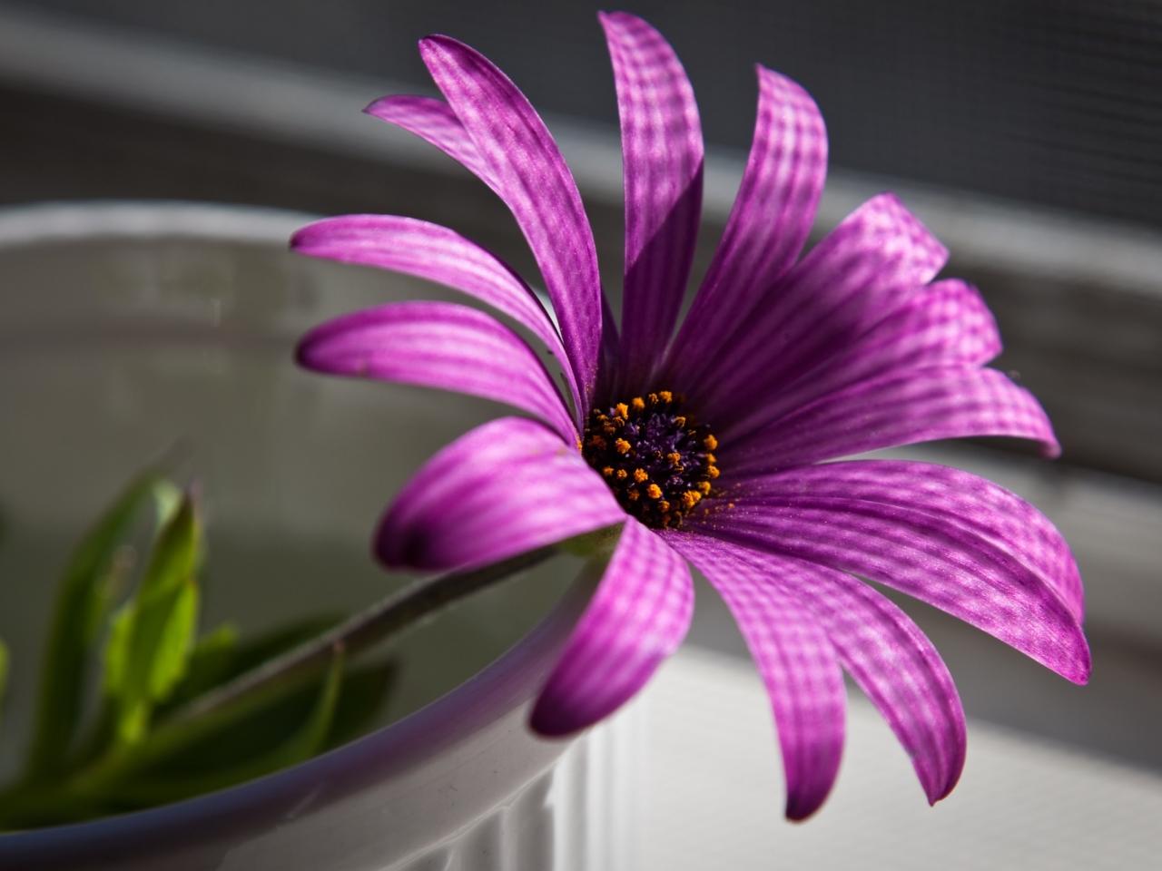 Flor purpura - 1280x960