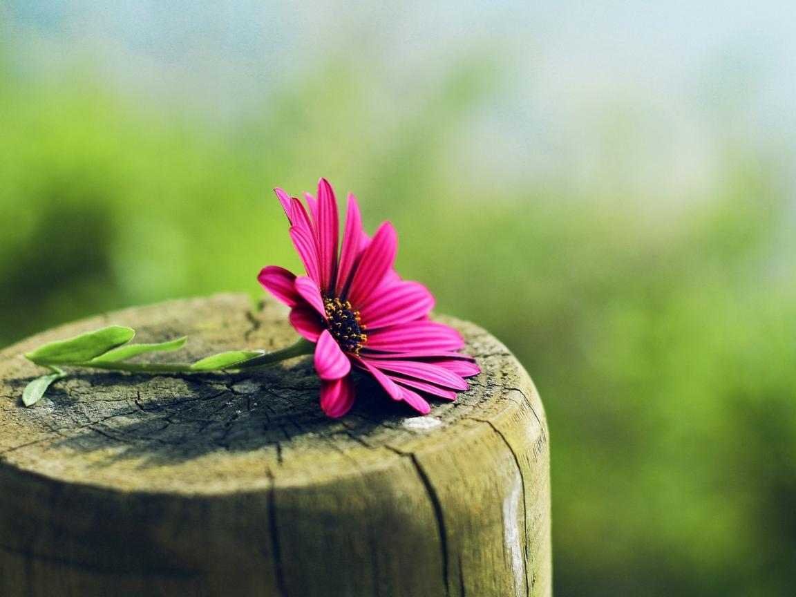 Flor sobre tronco de madera - 1152x864