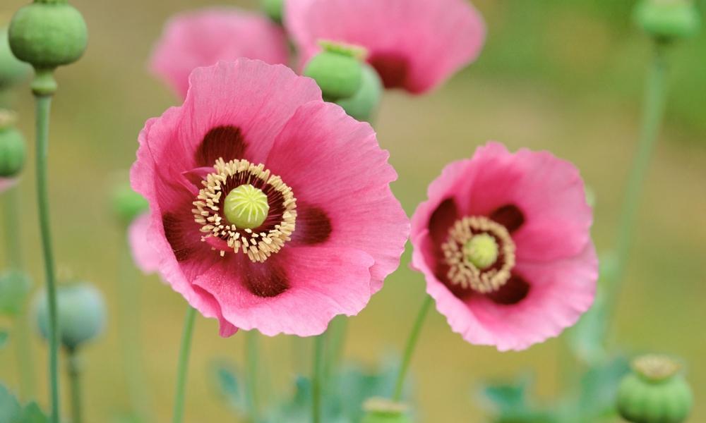 Flores en macro - 1000x600