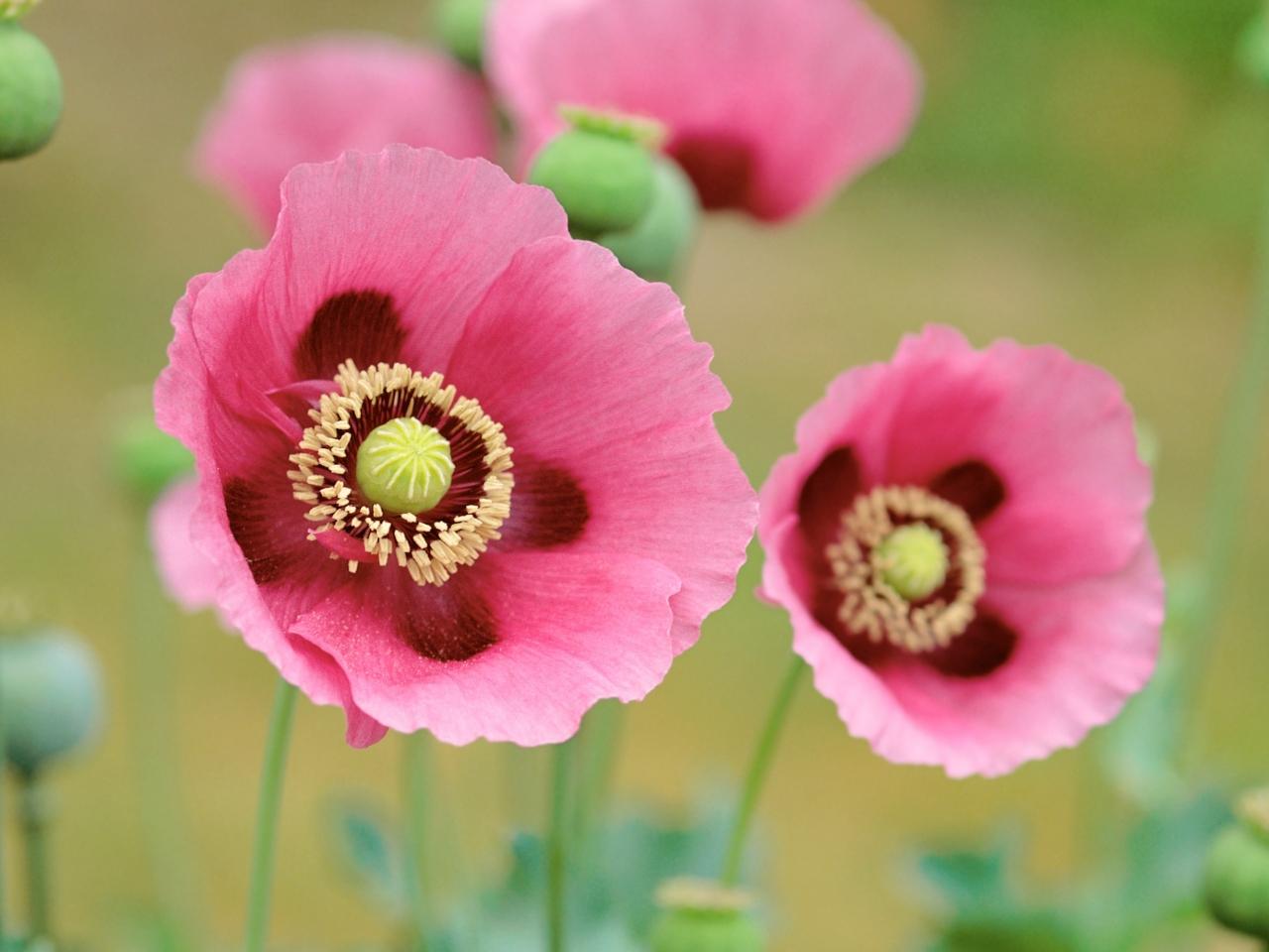 Flores en macro - 1280x960