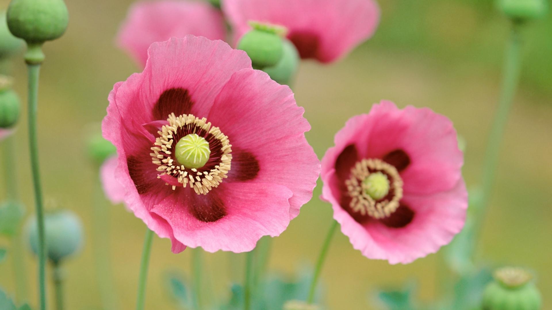 Flores en macro - 1920x1080