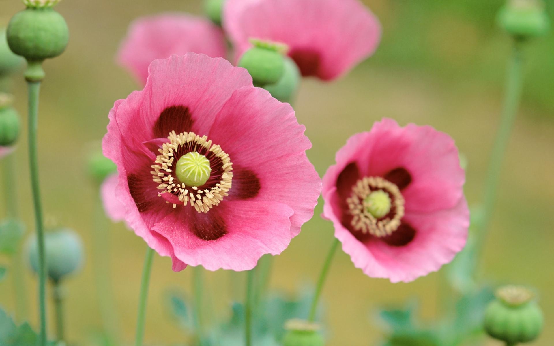 Flores en macro - 1920x1200