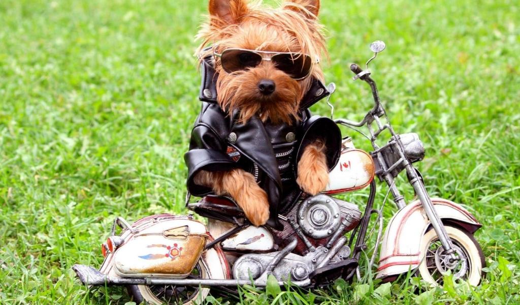 Fotos graciosa de perros - 1024x600