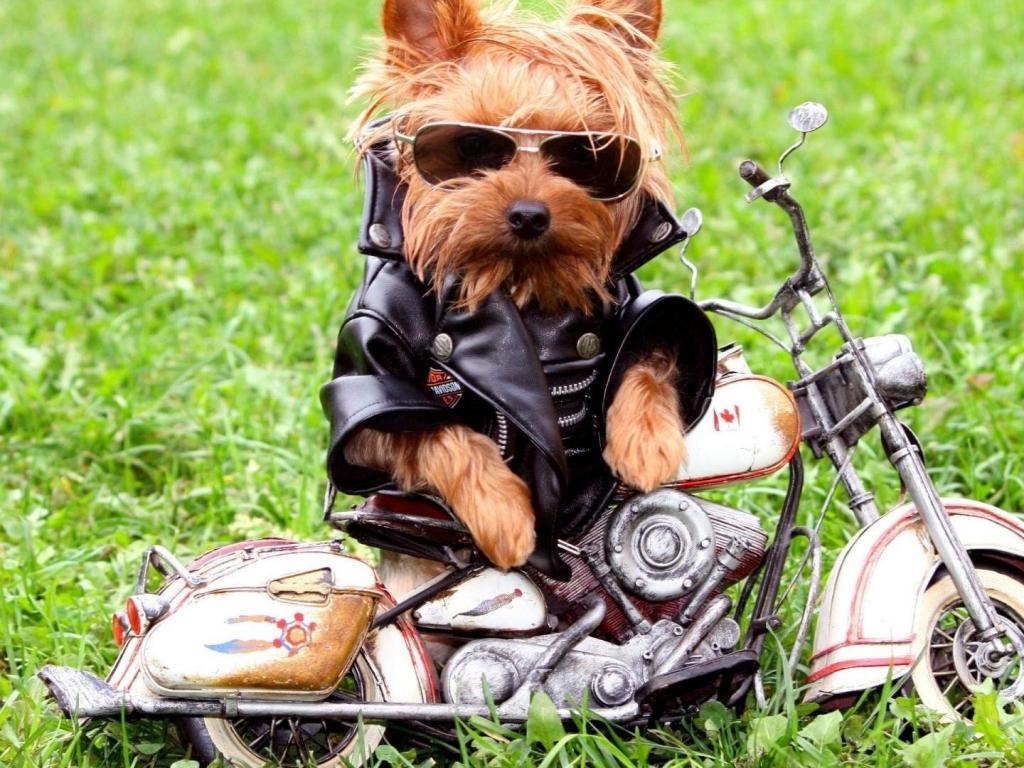 Fotos graciosa de perros - 1024x768