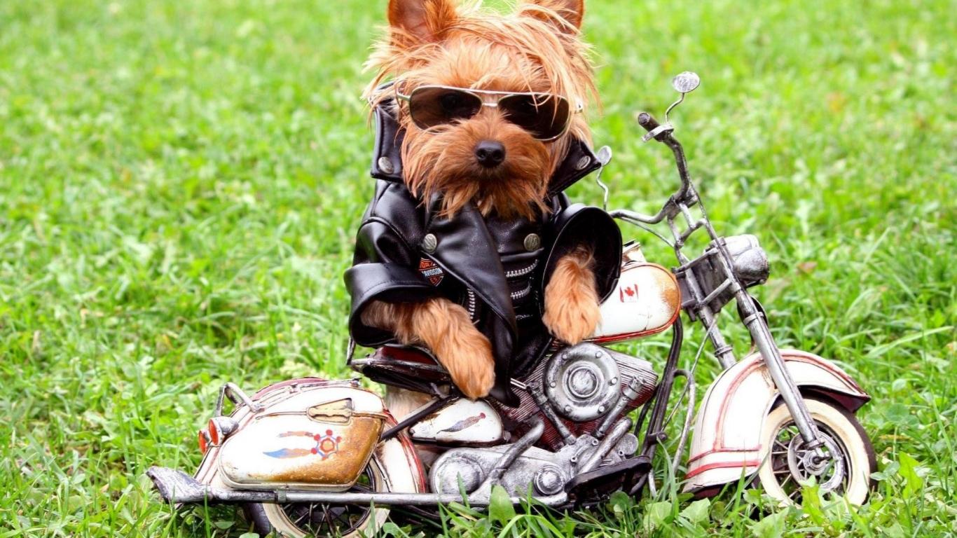 Fotos graciosa de perros - 1366x768