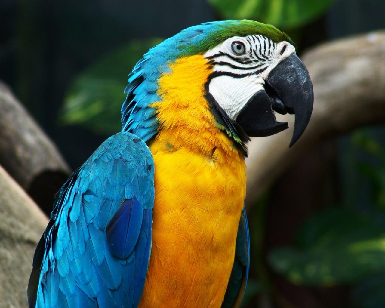 Guacamayo de colores - 1280x1024