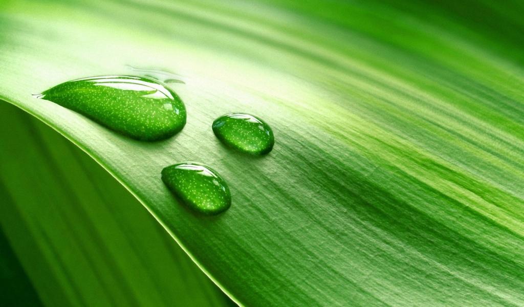 Hoja verde y gotas de agua - 1024x600