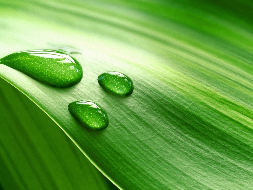 Hoja verde y gotas de agua - 1024x768
