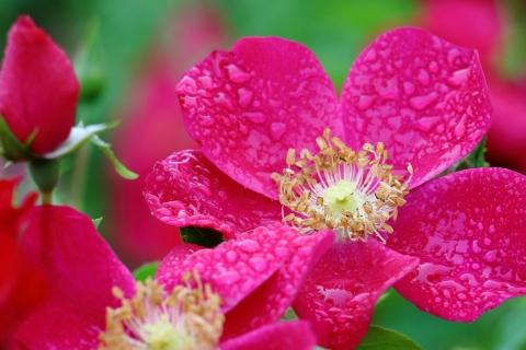 Hojas de flores rosadas - 480x320