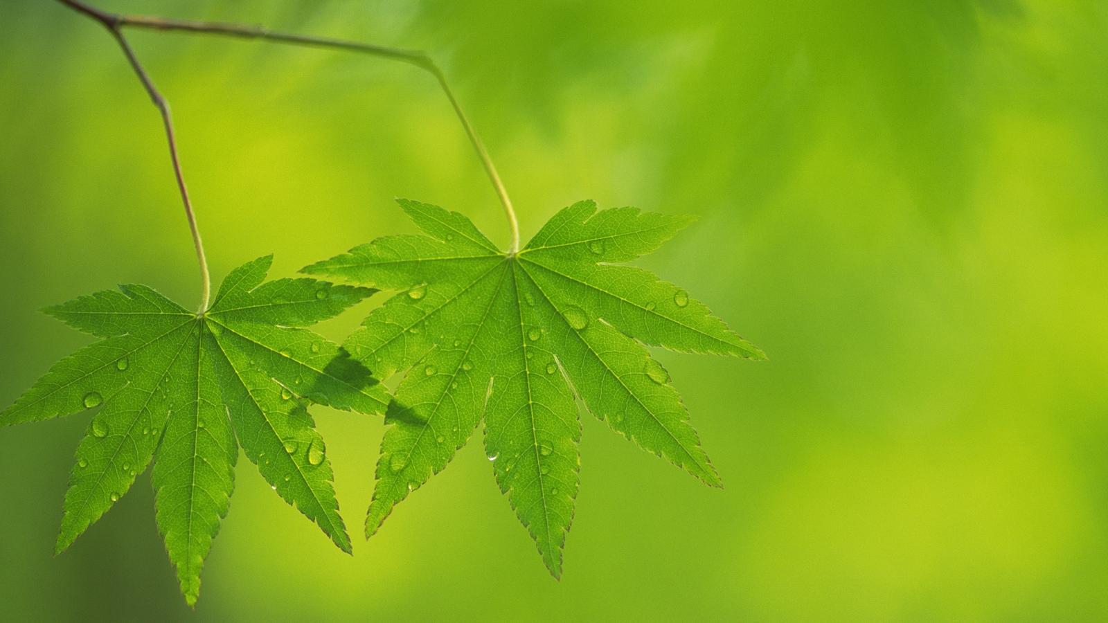 Fondos de Pantalla HD Cannabis - Taringa!