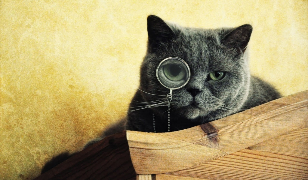 Imágenes graciosas de gatos - 1024x600