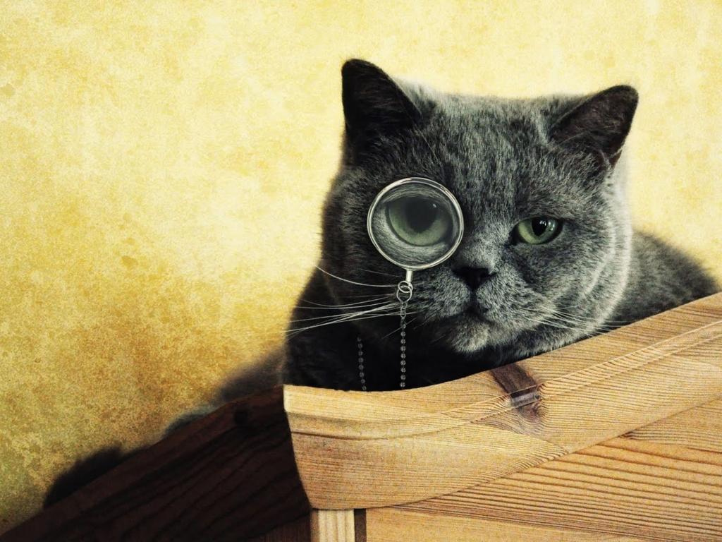 Imágenes graciosas de gatos - 1024x768