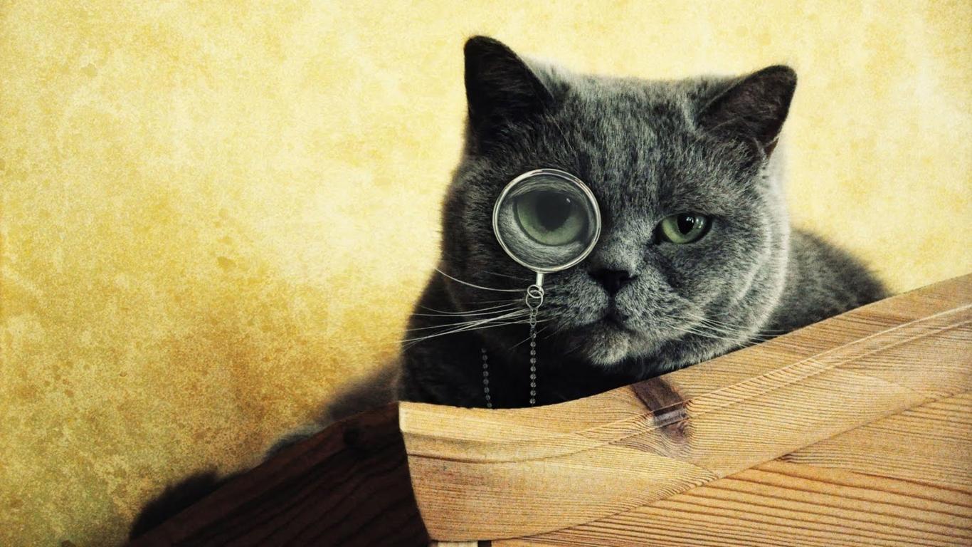 Imágenes graciosas de gatos - 1366x768