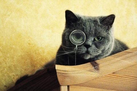 Imágenes graciosas de gatos - 480x320