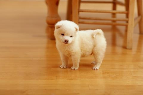 Lindo cachorro - 480x320