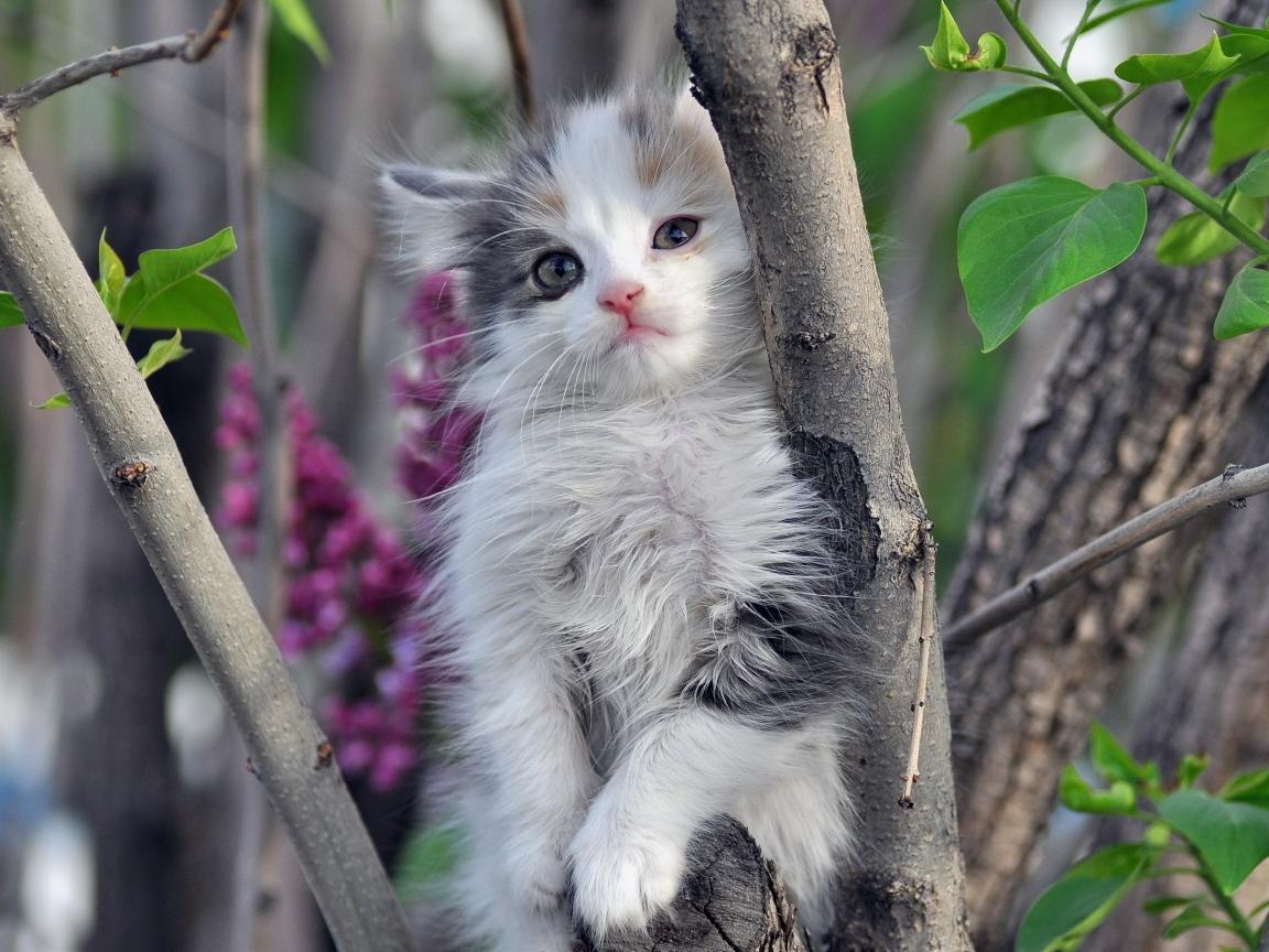 Lindo gatito - 1152x864
