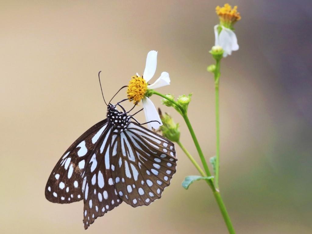 Mariposa y una flor - 1024x768