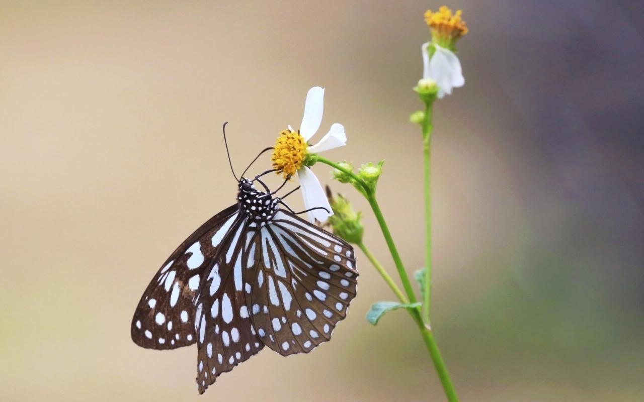 Mariposa y una flor - 1280x800