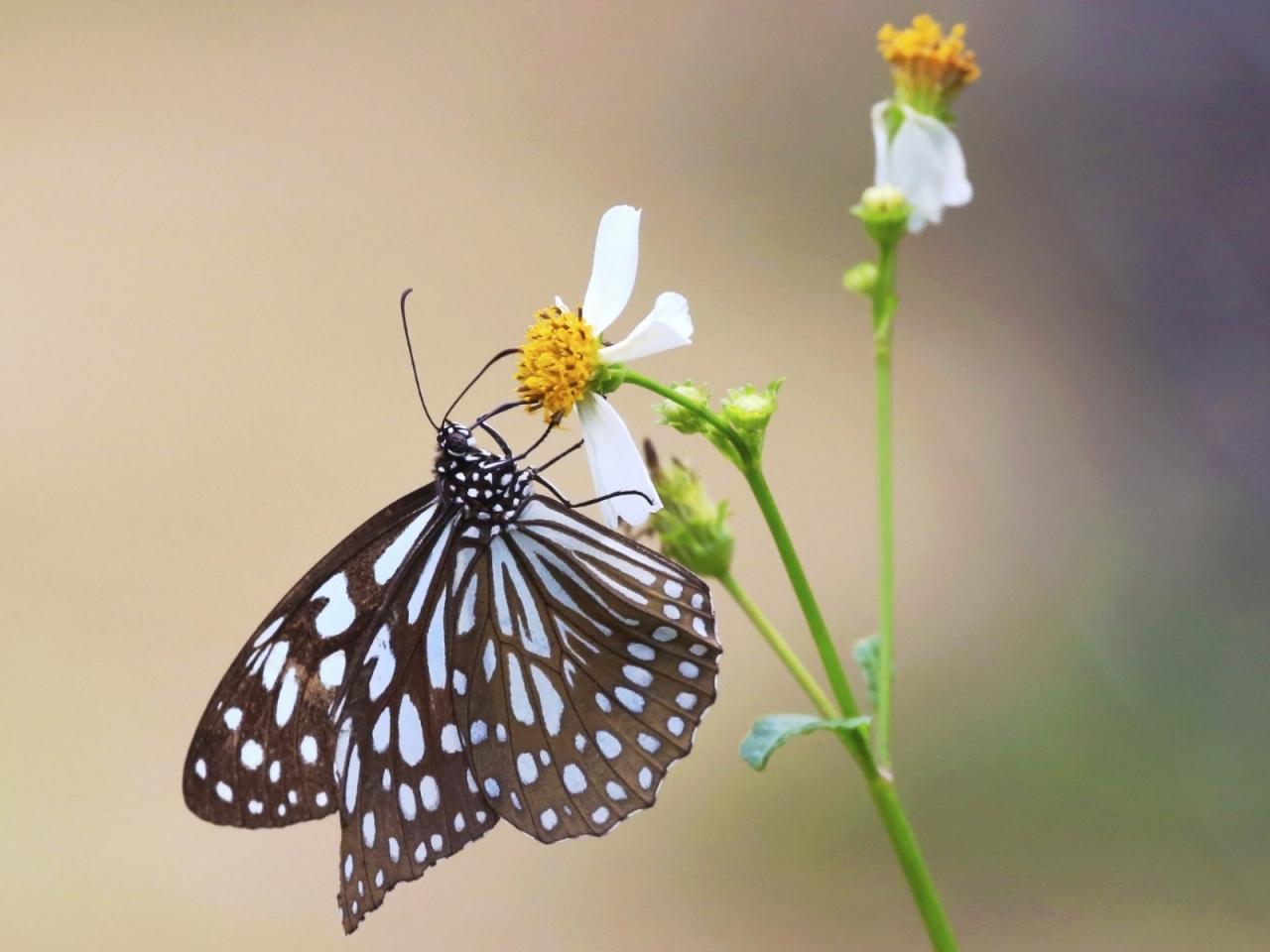 Mariposa y una flor - 1280x960