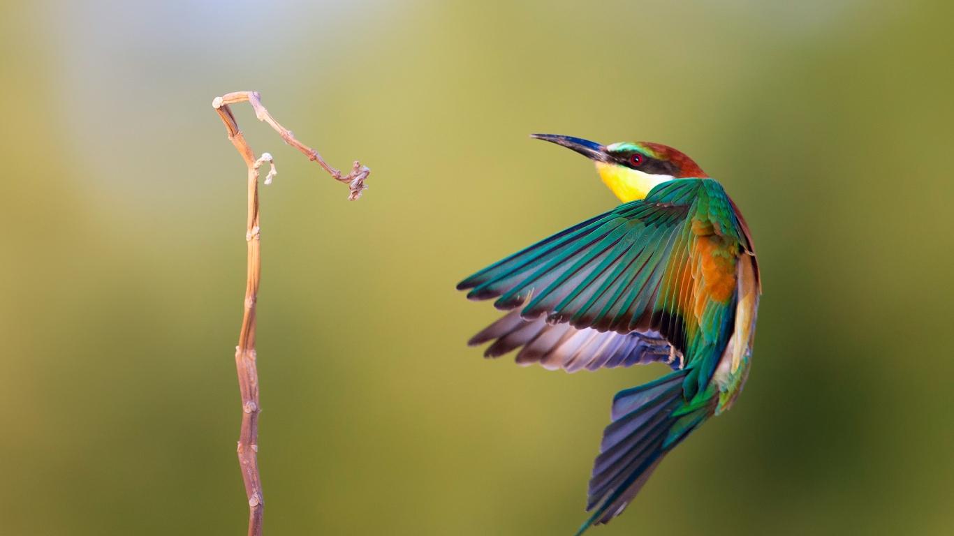 Pájaro de colores - 1366x768