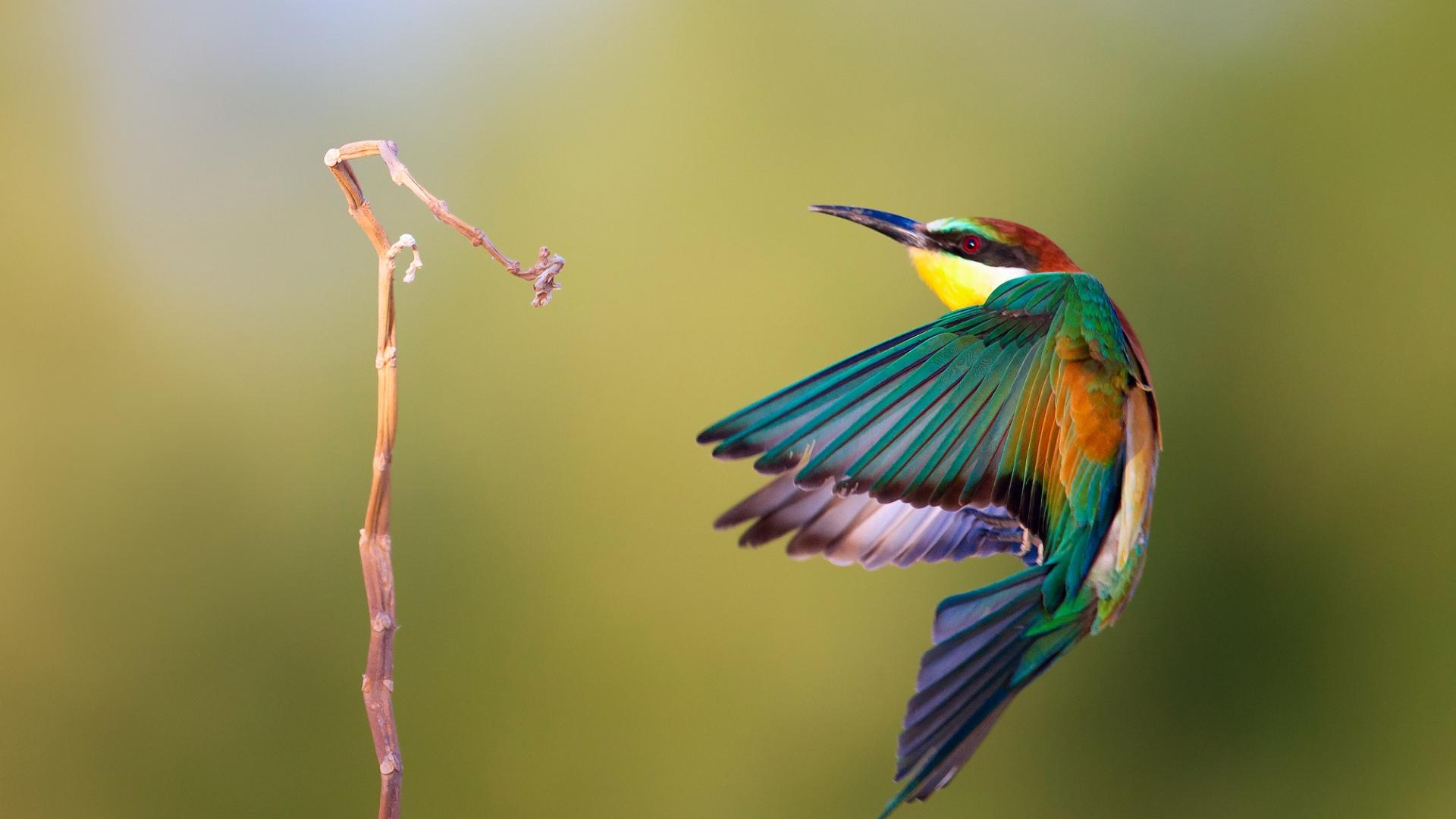 Pájaro de colores - 1920x1080