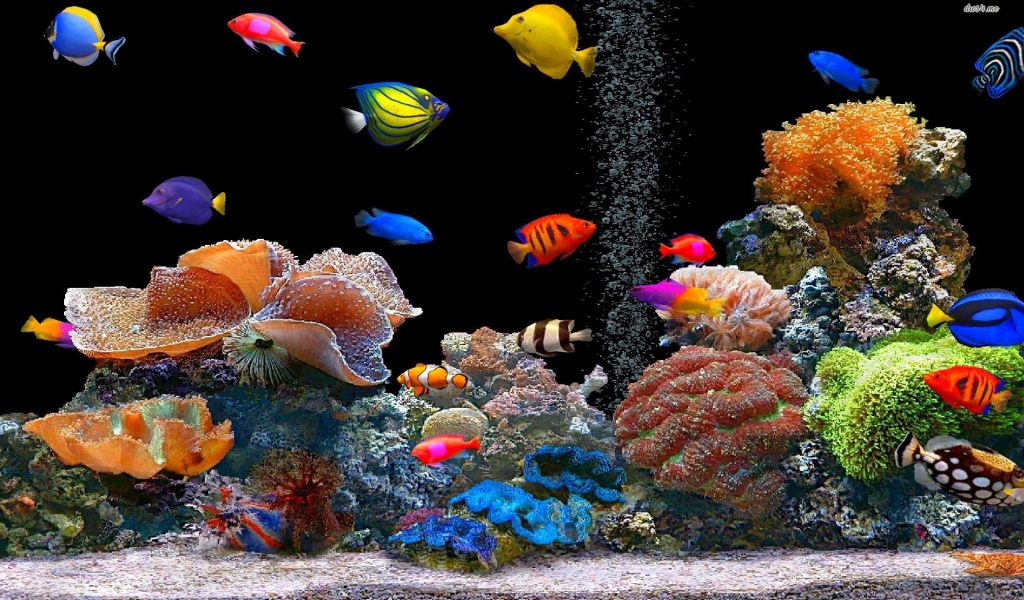 Peces de colores - 1024x600