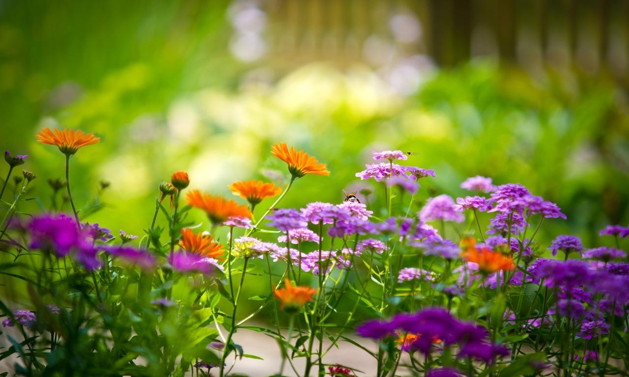 Pequeñas flores - 1280x768