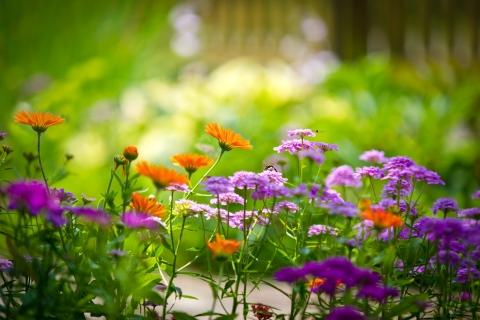 Pequeñas flores - 480x320