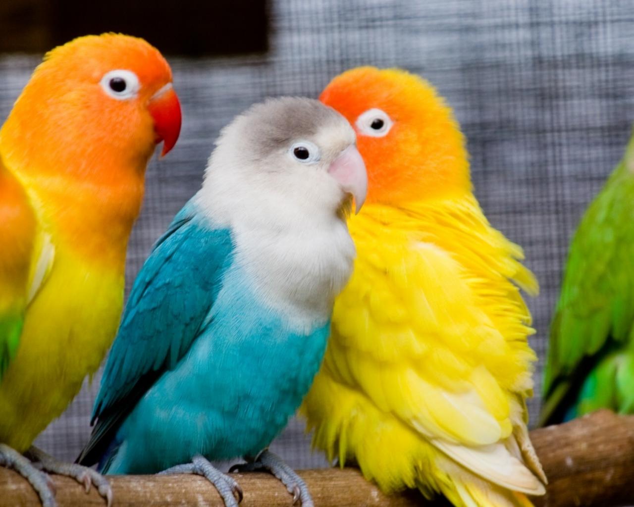 Pericos multicolor - 1280x1024