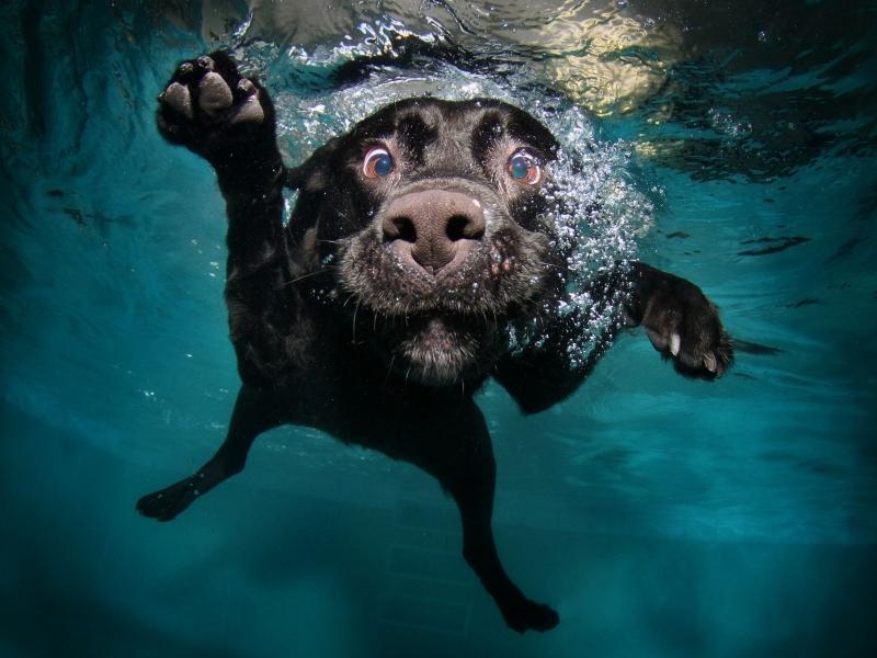 Perro en el agua - 800x600